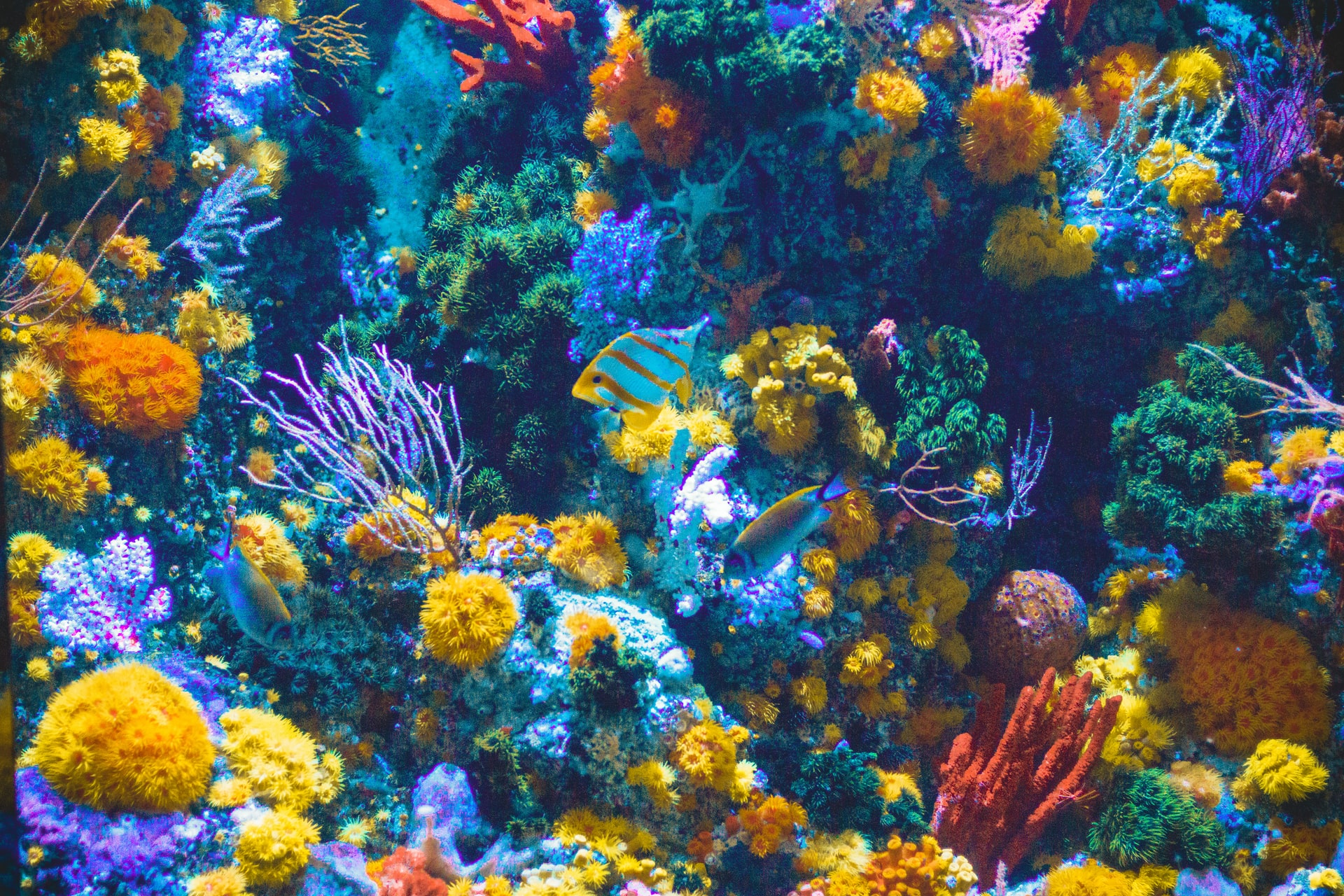 Hoe kun je passend verlichting vinden voor je aquarium